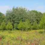 pigeon_swamp_field_1a